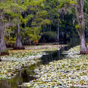 Photos of Caddo Lake Added to Gallery