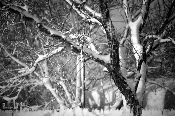 snowbranches LindaJames
