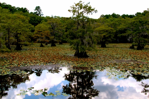 Caddo Lake e