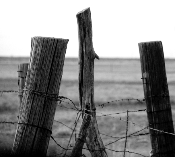 Old fences GB RDR