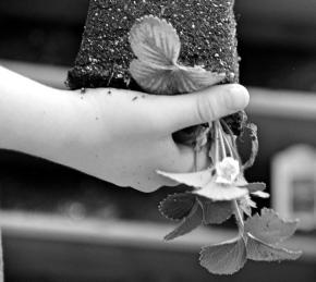Planting – Monochrome MadnessChallenge