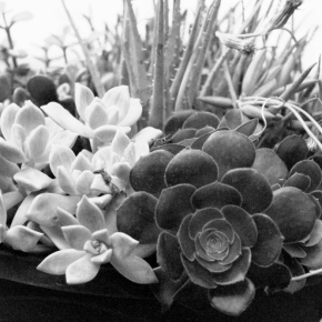 Bowl of Succulents – Monochrome Madness Challenge