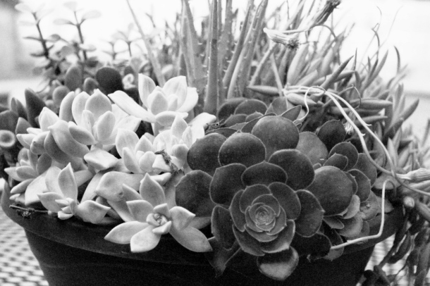 BowlOfSucculents__www.rainydayreflections__