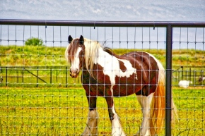 Horses Catch This City Girl'sEye
