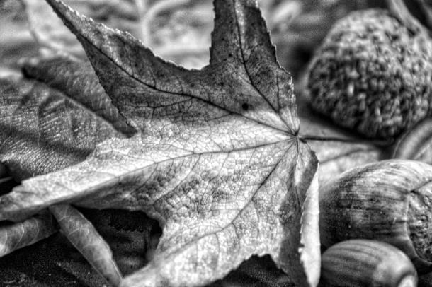 Fallen_LindaJamesPhotgraphy.jpeg