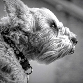 Taffy In the Wind – Monochrome MadnessChallenge