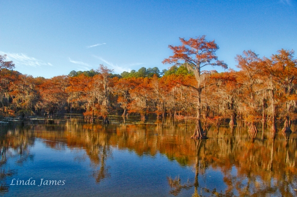caddointhefall-_lindajamesphotography