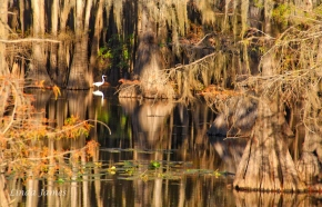 Fall at Caddo Lake