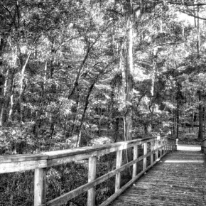 Bridge into the Woods – Monochrome Madness Challenge