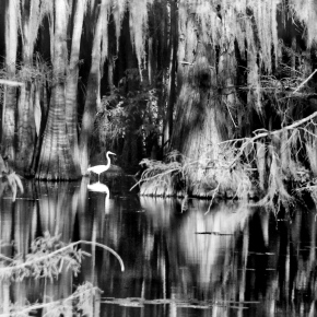 Great Egret Reflection – Monochrome Madness Challenge