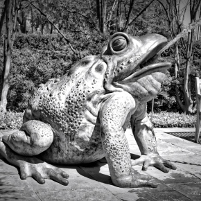 Frog Fountain – Dallas Arboretum