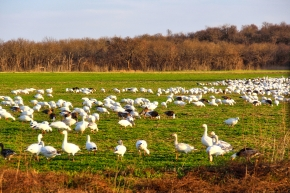 Worth the Trip – Hagerman Wildlife Refuge