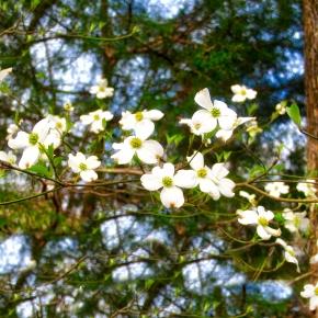 Road Trip – Davey Dogwood Park – Palestine,Texas