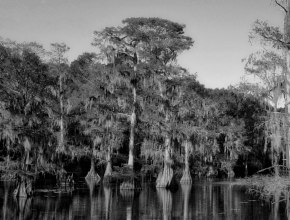 Cypress Trees at Caddo Lake (BW)
