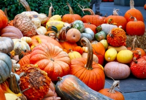 Fall Pumpkins & Gourds