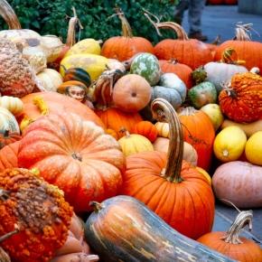 Fall Pumpkins &Gourds