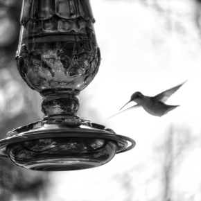 Hummingbird Visit (MM)