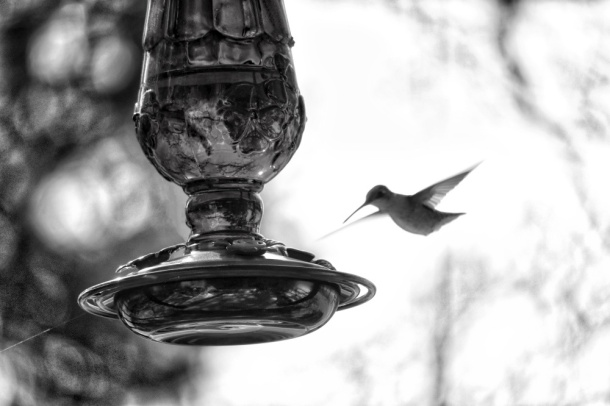 HummingbirdVisit_LindaJamesPhotography_MM