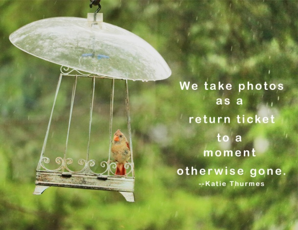bird-moment